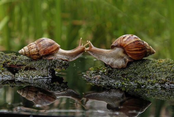 Ambas criaturas se acercaron uno al otro y decidieron demostrarse su amo...
