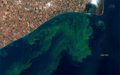Algas tóxicas, un gran problema ambiental