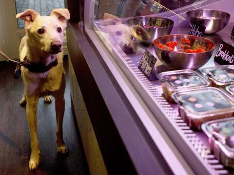 ¿Estás preocupado por la alimentación de tu canino?...