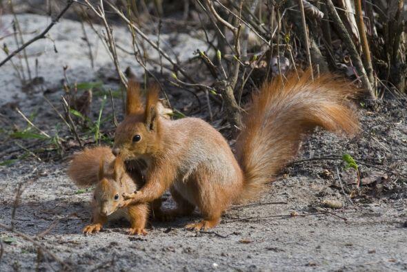 Tiernas fotos de madres del mundo animal