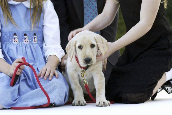Luego vienen los perros de apoyo emocional, quienes proveen consuelo y m...