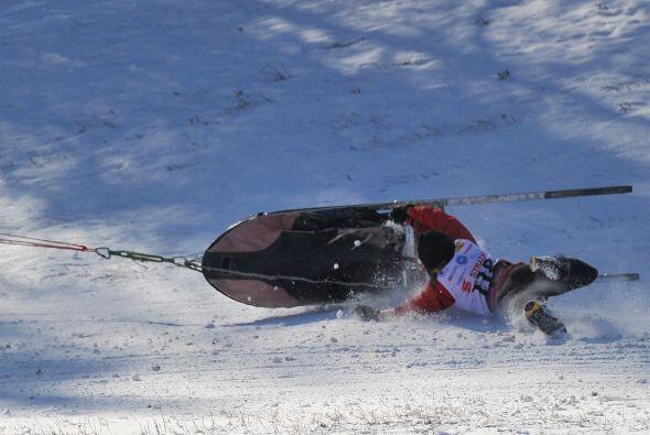 Durante tres días el campeonato del Mundo de trineo de perros se disputa...