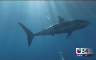 La importancia de cuidar y salvar a los tiburones