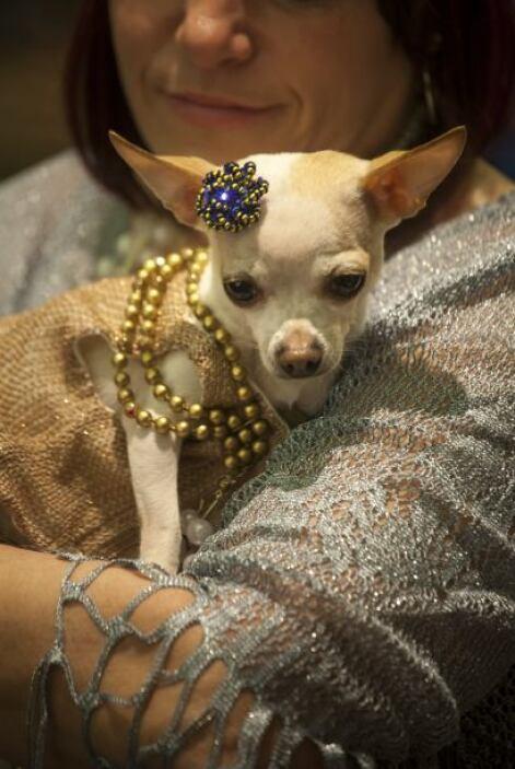 ¡SEMANA DE LA MODA… CANINA!  Nueva York celebra la Semana de la Moda, ¡i...