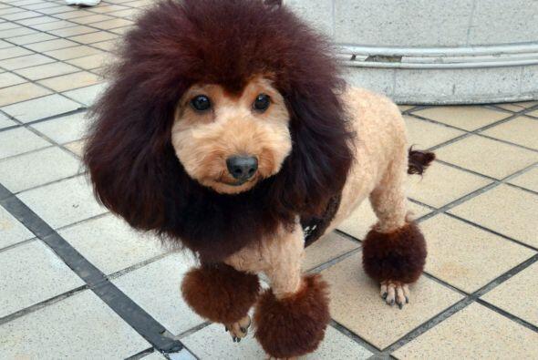 ¿Perros o leones?