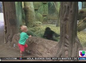 Viral: ¡Gorila y bebé juegan sin parar!