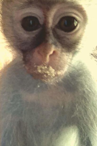 La vida de este adorable mono bebé cambió totalmente cuand...