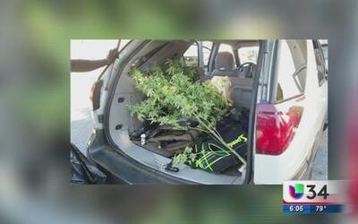 Descubren marihuana oculta en vehículo