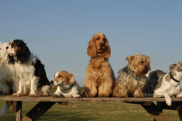 Si tienes planes de adquirir una mascota, no está de más conocer cuáles...