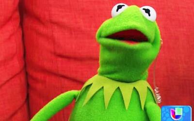 La Rana Kermit llegó a Despierta