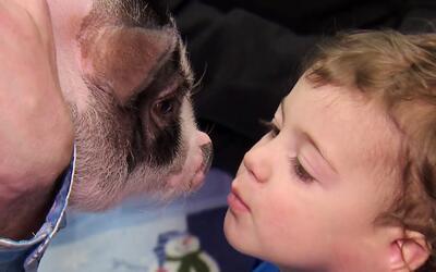 Que empiece la diversión: La terapia con animalitos en NY es lo de hoy
