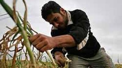 Campesinos aguantan condiciones deplorables por miedo al despido 746b548...