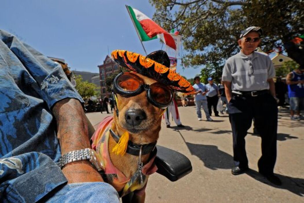 Además promueve su ciudado, como llevarlos cada seis meses al veterinari...