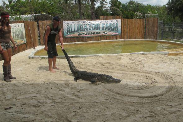 El instructor les enseñó cómo manejar a estos animales para no molestarlos.