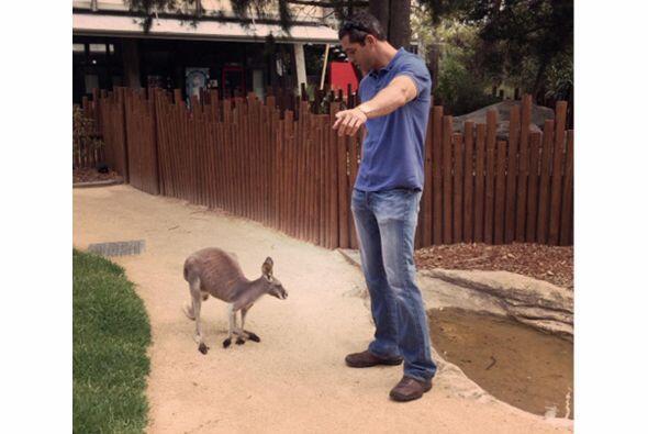 Su prometido junto a un canguro. Mira aquí los videos más chismosos.