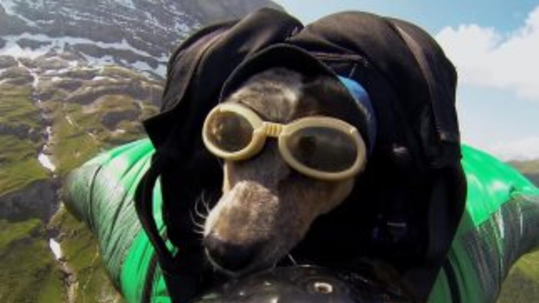 Whisper, el primer perro en hacer un salto BASE.