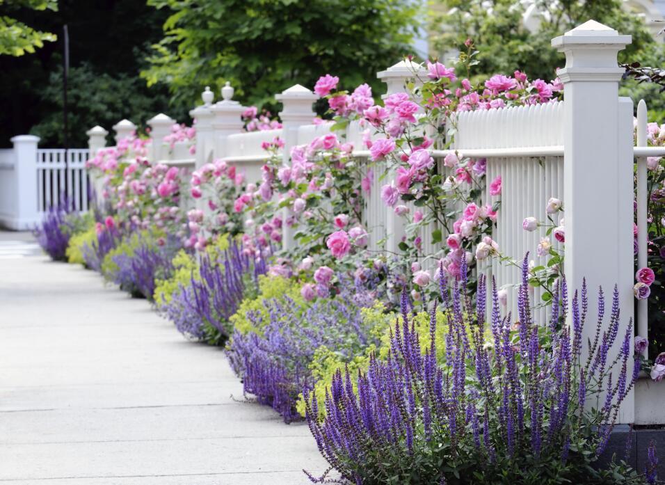 ¡Llegó la primavera!, la estación de la alegría, las flores y la oportun...