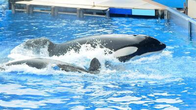 SeaWorld demanda a California por prohibición de criar orcas seaworld.jpg