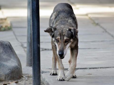 """El perro """"Hachi"""" boliviano da una muestra de lealtad y y perse..."""