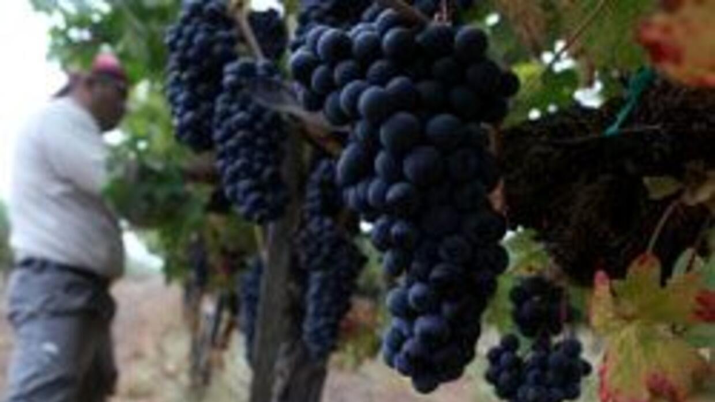 Acusan a corporaciones de manipular imagen de viñedos familiares d23ba4e...