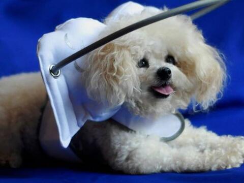 La vida de un perro ciego es bastante difícil, para esta peque&nt...