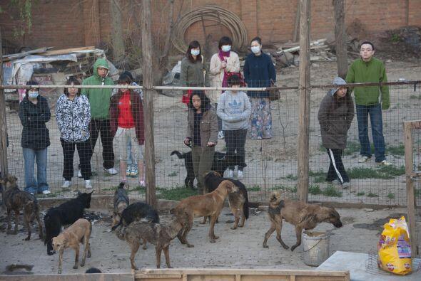 Ahora los cachorros se encuentran en un centro de atención a animales en...