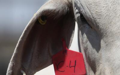 Exportadores de carne en México buscan mercados musulmanes como alternat...