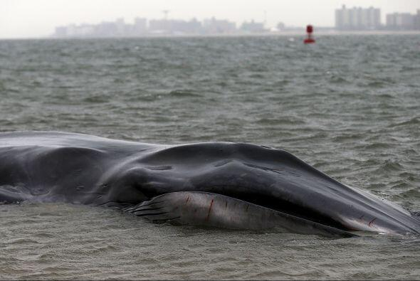 Están a la espera de la llegada de expertos en vida marina, seg&u...