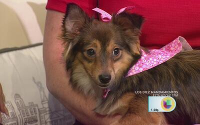 Ángela Mayer adoptó un perrito y se goza cada momento