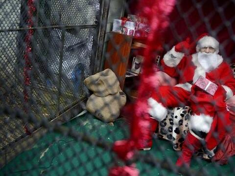 Un Papa Noel permanece encerrado en el zoo de Praga, República Checa. Se...