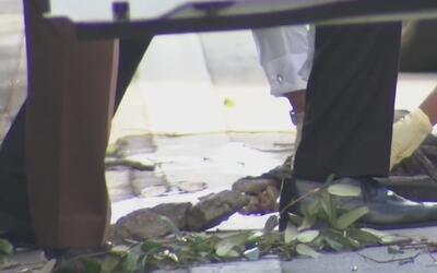 Hallan presuntos restos humanos en el suroeste de Miami-Dade