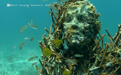 Un museo subacuático que proteje a los corales