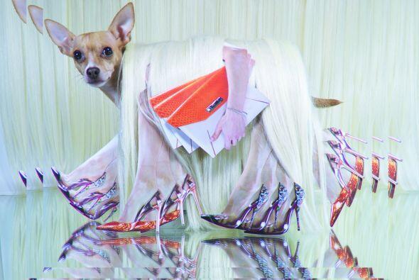 Este es un singular perro chihuahua de nombre Goldie y goza de una gran...