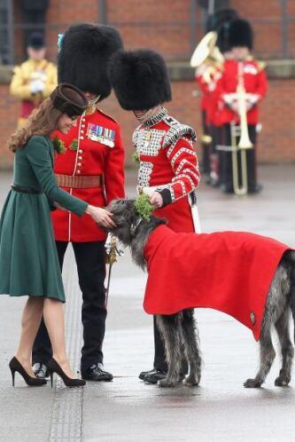 Wolfhound Irlandés: Es un perro de origen celta, su nombre proviene de q...