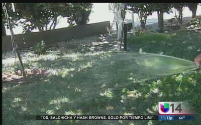 Habitantes de San José ahorrarán agua cambiando su jardín