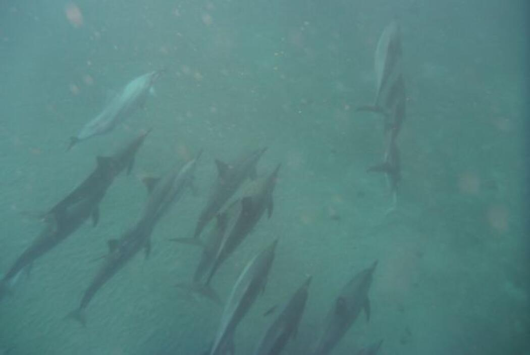 """""""De momento, entre 15 y 20 delfines pasaban casi al lado nuestro y esto..."""