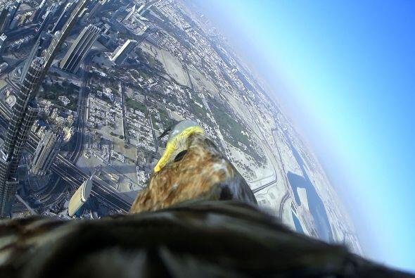 ¡Esta ave en particular ha volado desde la parte superior de la Ca...