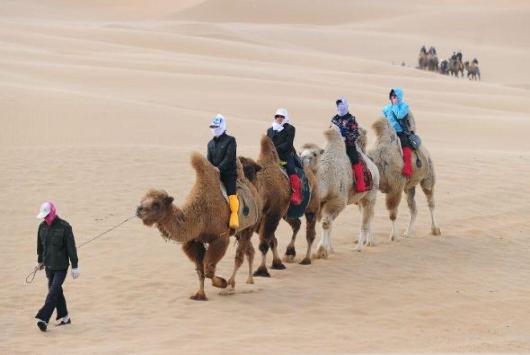 Cientos de personas llegan con sus camellos a los concursos.