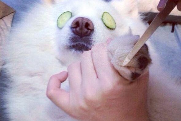 ¡Es hora de 'manicure'! Estos perritos se dejan consentir por sus dueños.