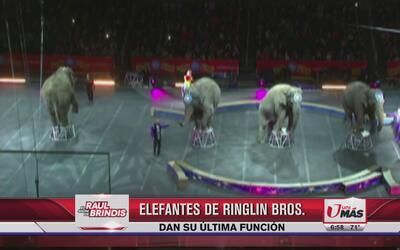 Elefantes de Ringle Bros dan su última función