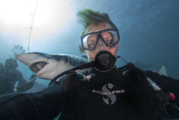 Aaron Gekoski mencionó que cada año alrededor de 100 tibur...
