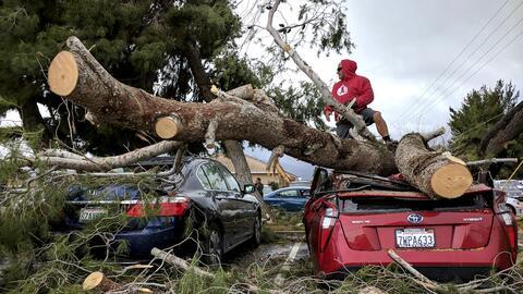 La escena de árboles caídos sobre vehículos fue una...