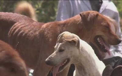 Cientos de perros abandonados encuentran un refugio