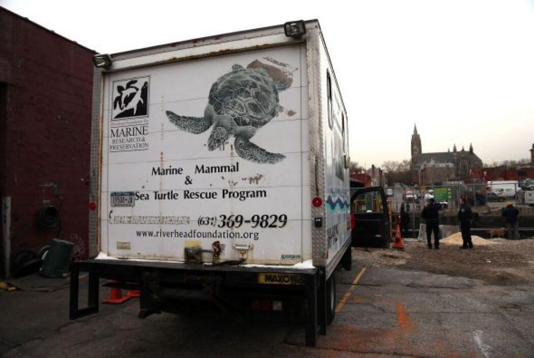 Delfin quedó atascado en canal contaminado en NY
