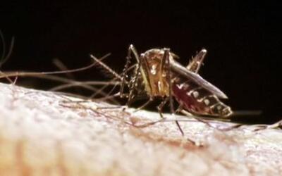 La CDC investiga el posible primer contagio de Zika en el país