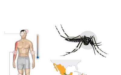 La transmisión del virus Zika