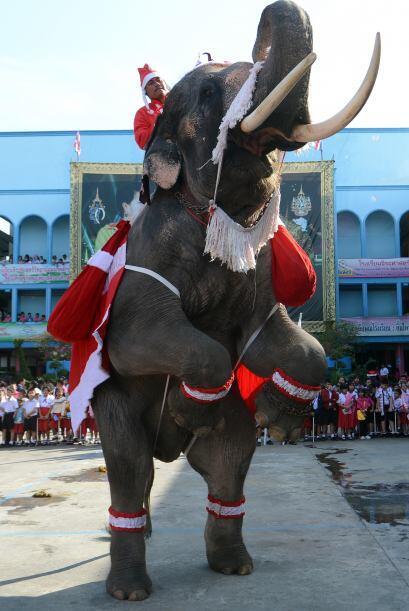 Y entrena elefantes.