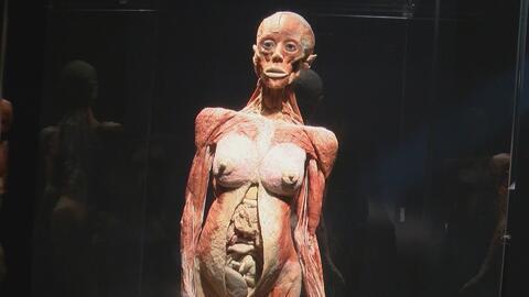 La exhibición de cuerpos Body Worlds está de vuelta al California Scienc...