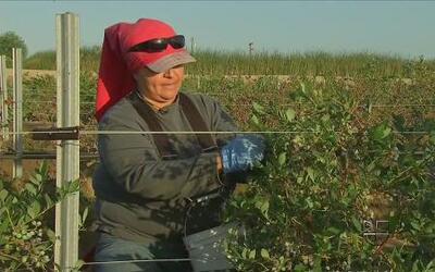 César Chávez, líder sindical de campesinos es recordado en Bakersfield,...