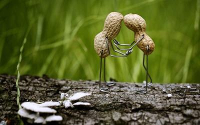 ¡OMG! Los cacahuates cobraron vida